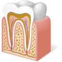 body-tooth-anatomy-icon